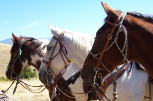 Paint, White, and Chestnut Horses