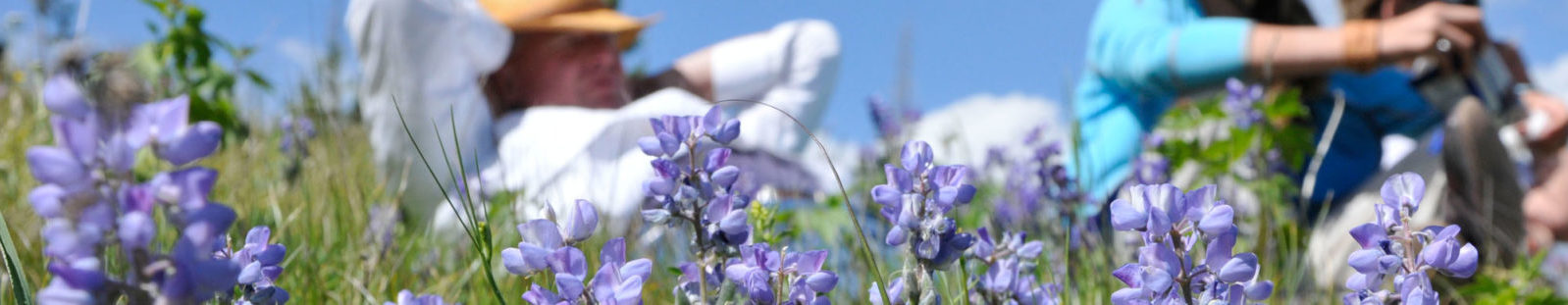 Purple Flowers and Relaxing People - Yellowstone things to do