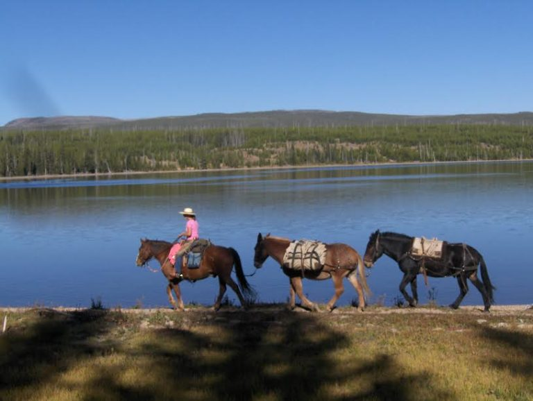 Rider Leading Mules - Yellowstone Horse Pack Trips