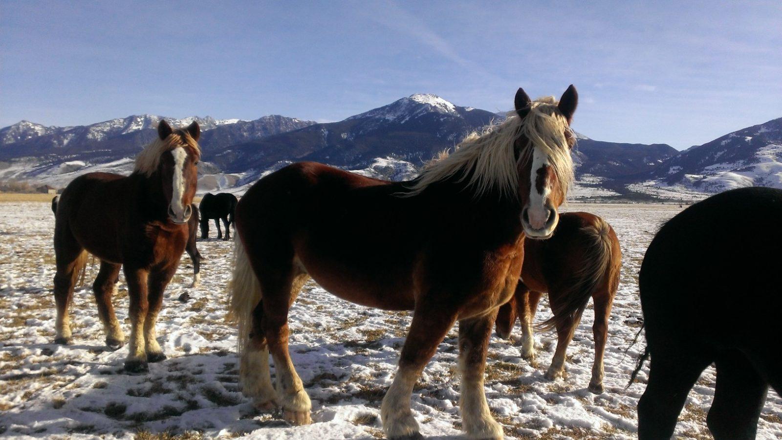 winter horseback riding in yellowstone
