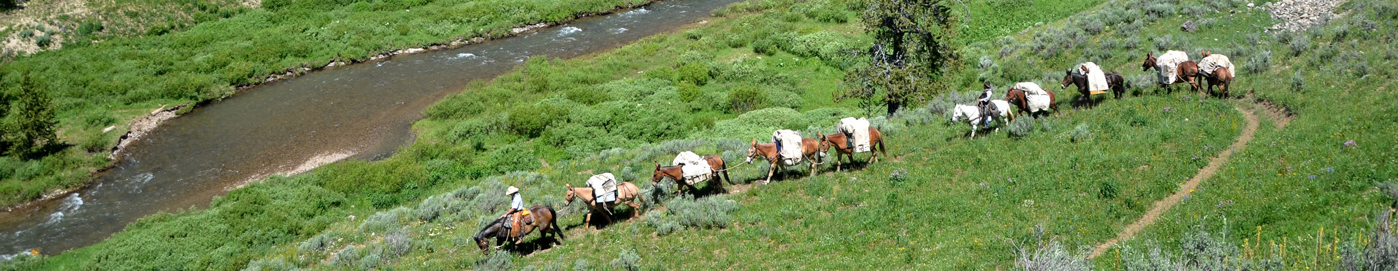 Line of Horses